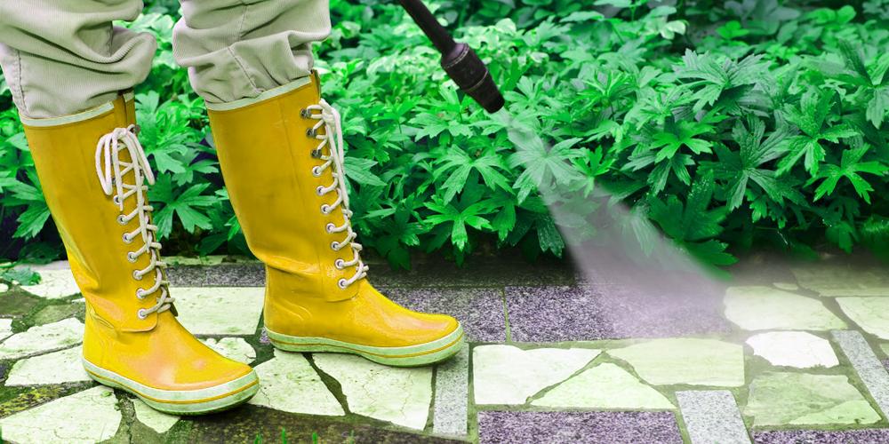 أرخص شركة رش مبيدات بحائل